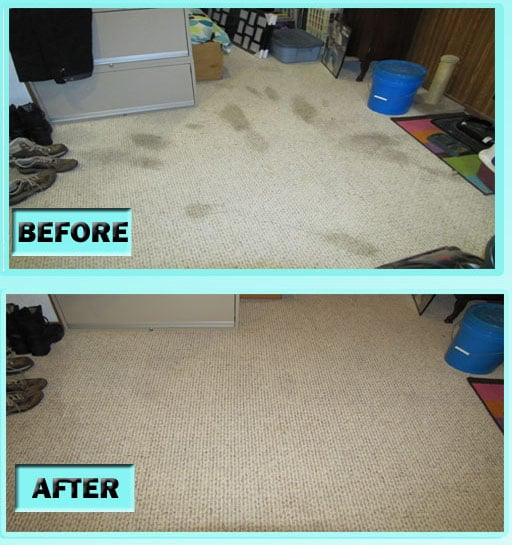 DIY Carpet Cleaning - Old Pet Stains In Carpet
