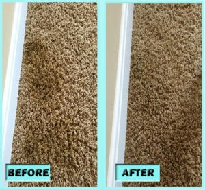 DIY Carpet Cleaning Pet Stains