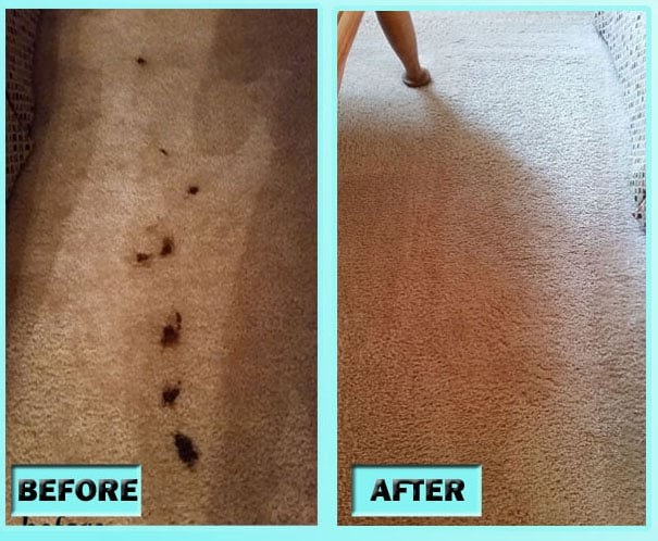 DIY Carpet Cleaning - Pet Stains